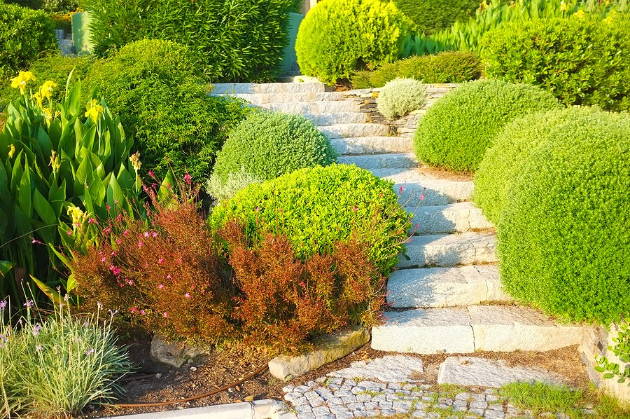 stone path walks in the garden
