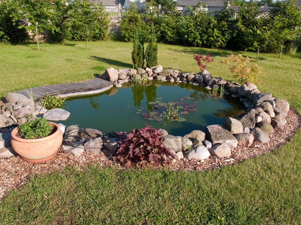 small pond in the garden
